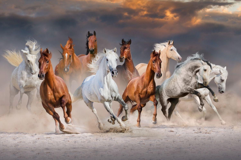 Фрески «Табун лошадей»