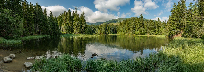 Фотообои «Летний лес»