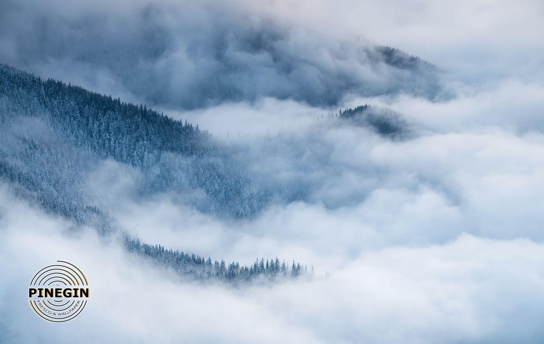 Фотообои «Лес в тумане»