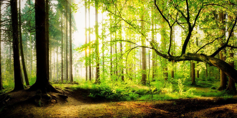 Фрески «Загадочный лес»