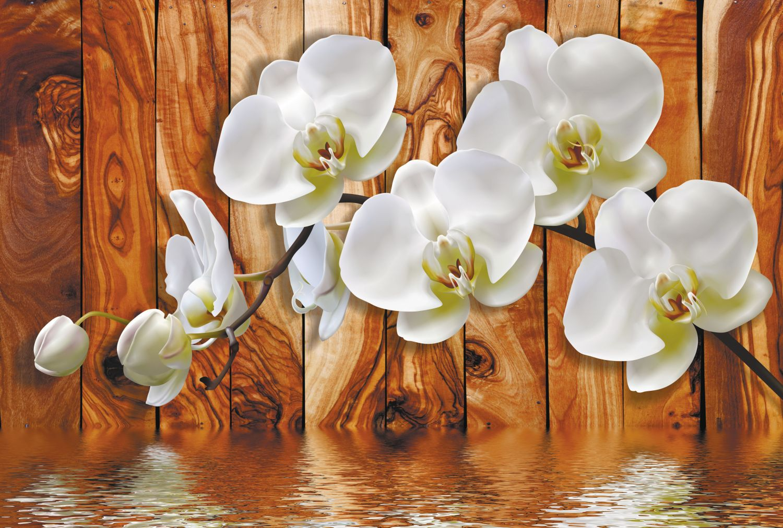 Фотообои «Нежные орхидеи»