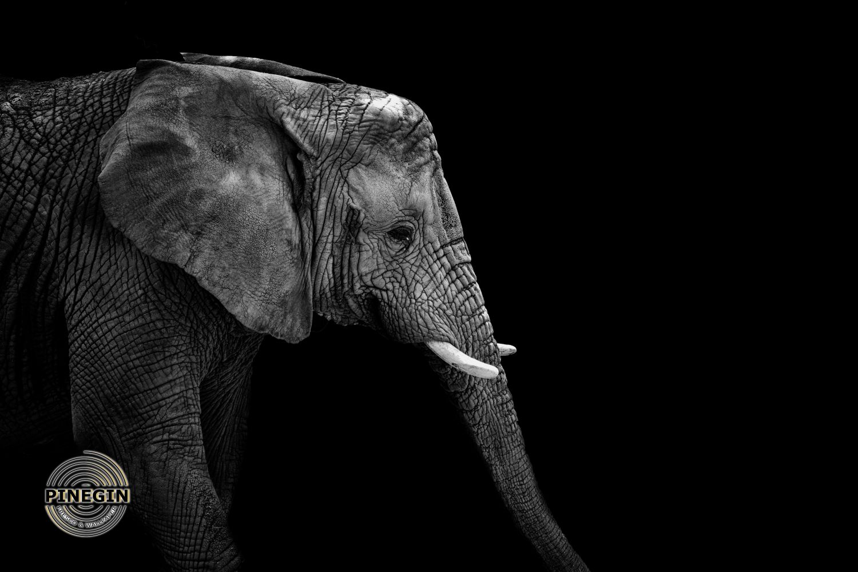 Фотообои «Слон »