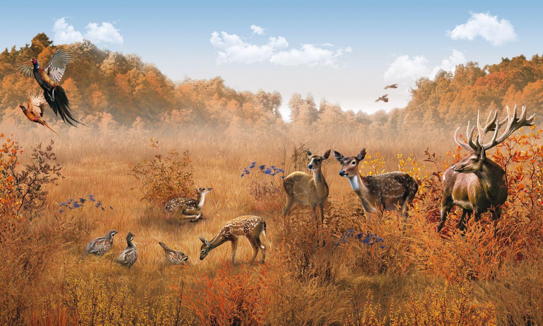 Фотообои «Очарование лесных жителей»