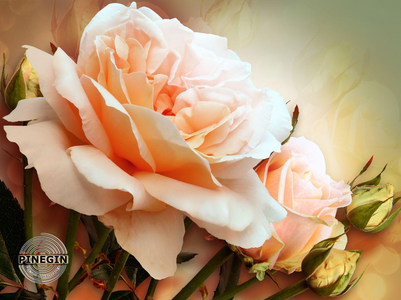 Фотообои «Большая коралловая роза»