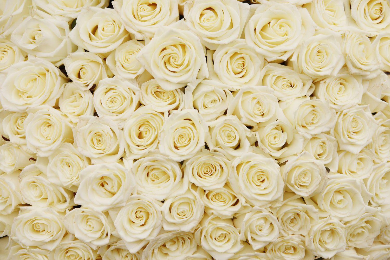 Фрески «Миллион белых роз»