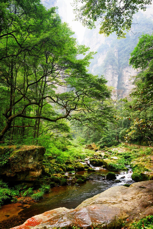 Фрески «Изумительный лес»