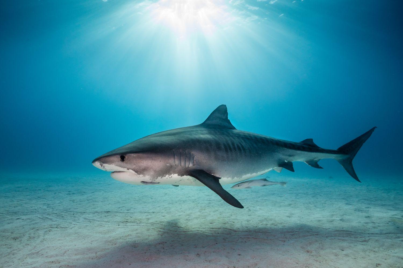 Фрески «Акулы 26»