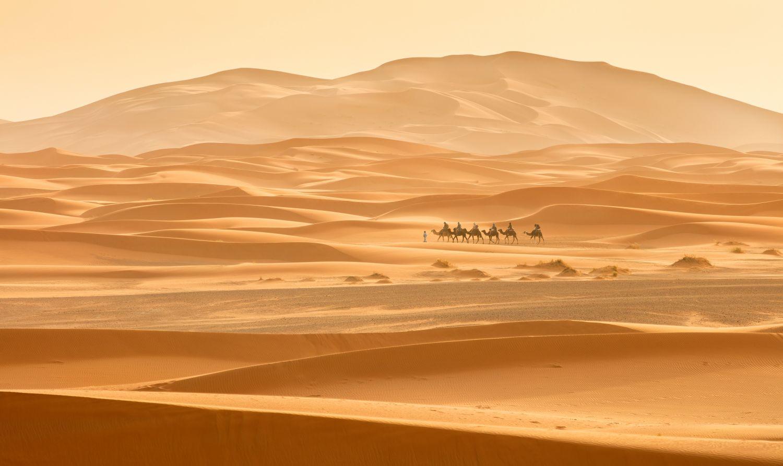 Фотообои «Караван в пустыне »