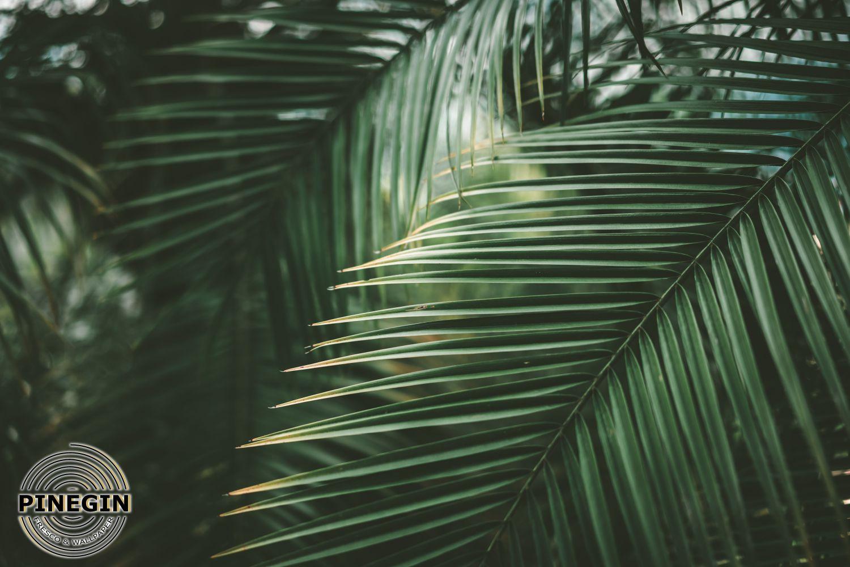 Фотообои «Листья пальмы»