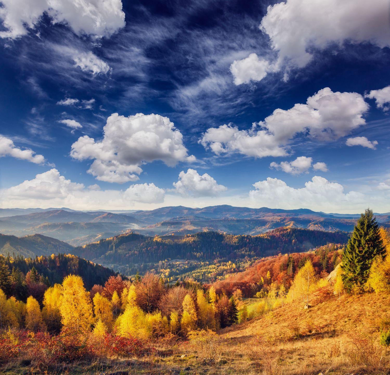 Фрески «Багряная осень »