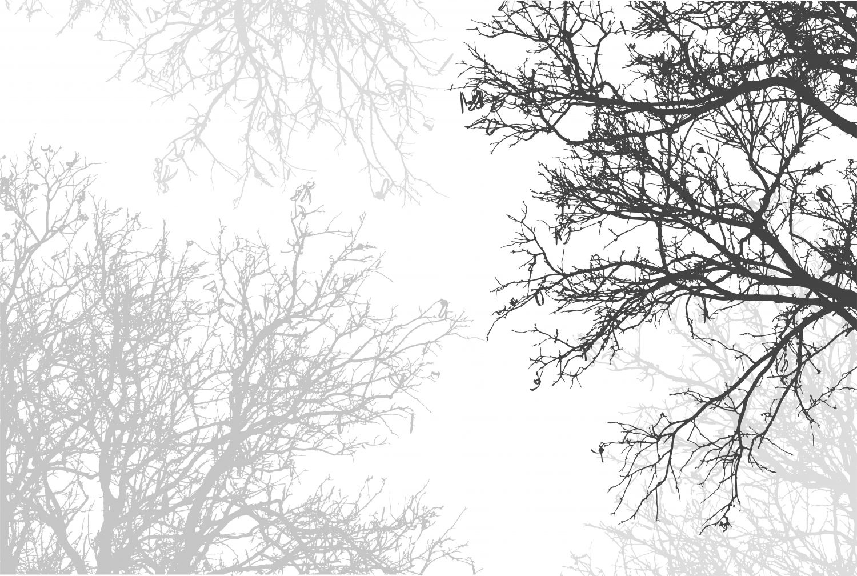 Фотообои «Черно-белые деревья»