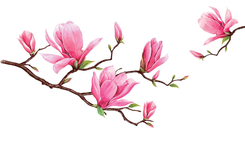 Фотообои «Розовые магнолии»