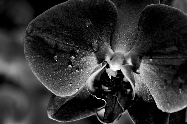 Фрески «Орхидеи 5»