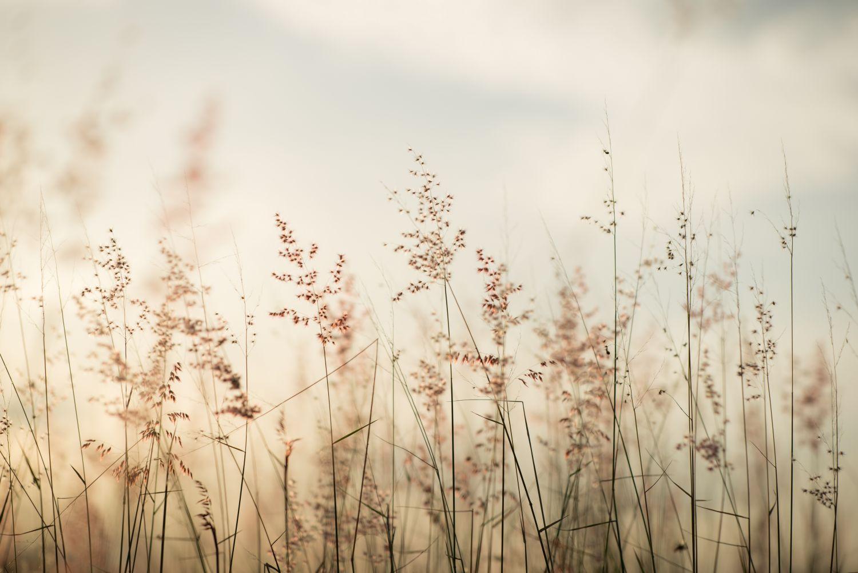 Фотообои «Травинки винтаж»