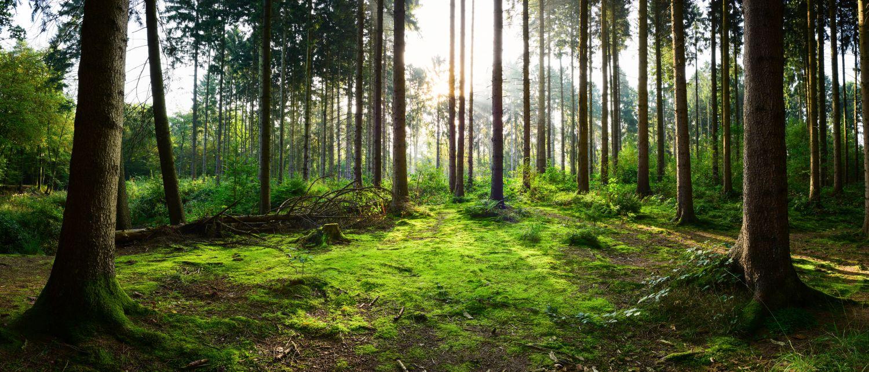 Фотообои «Утро в лесу»