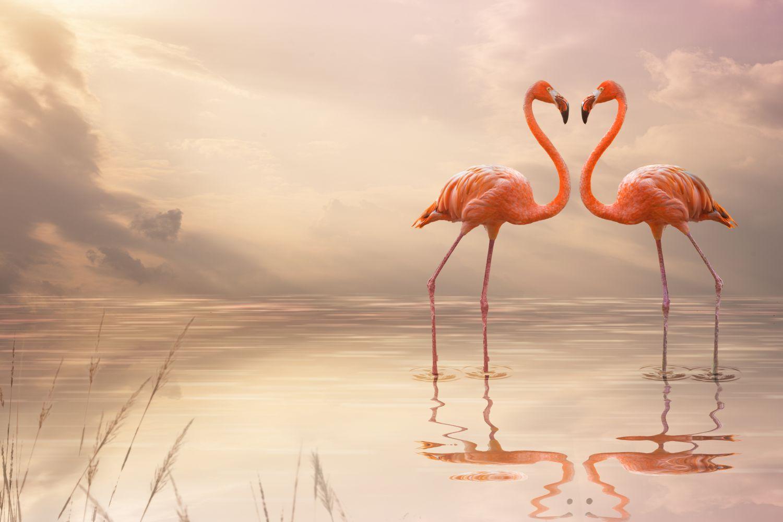 Фотообои «Пара фламинго»