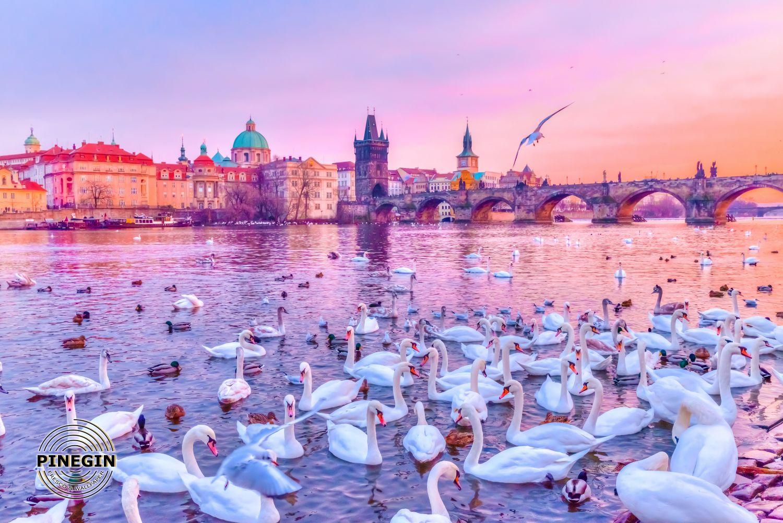 Фотообои «Лебеди в Праге»