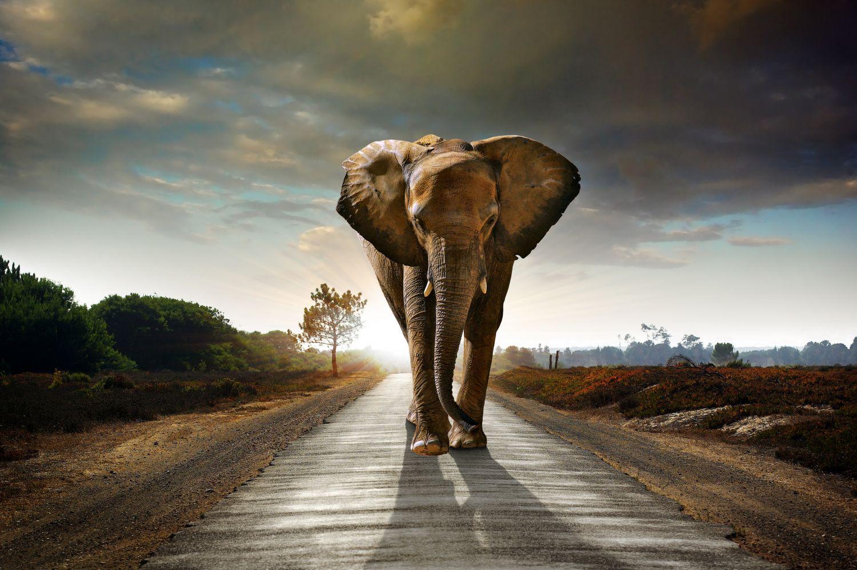 Фотообои «Слон на дороге»