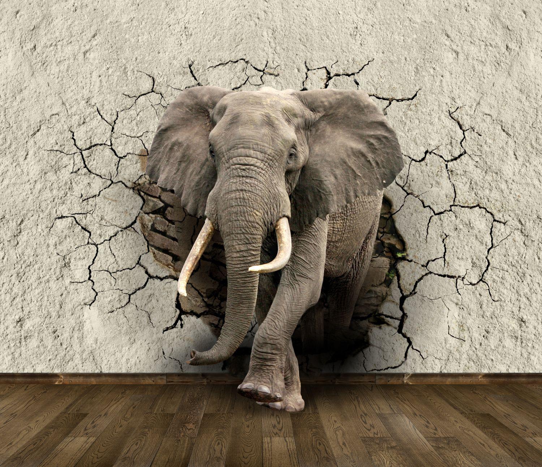 Фотообои «Крупный слон»