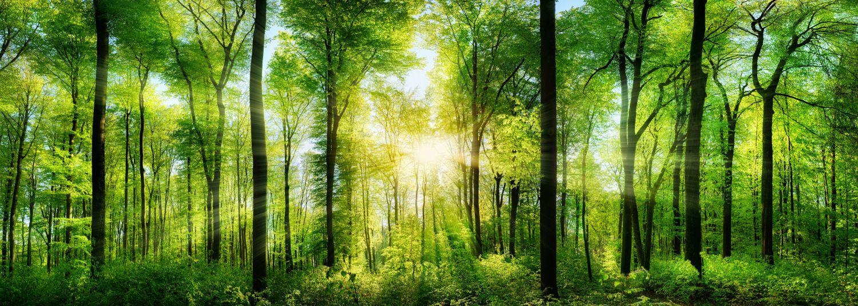 Фотообои «Солнце в лесу»
