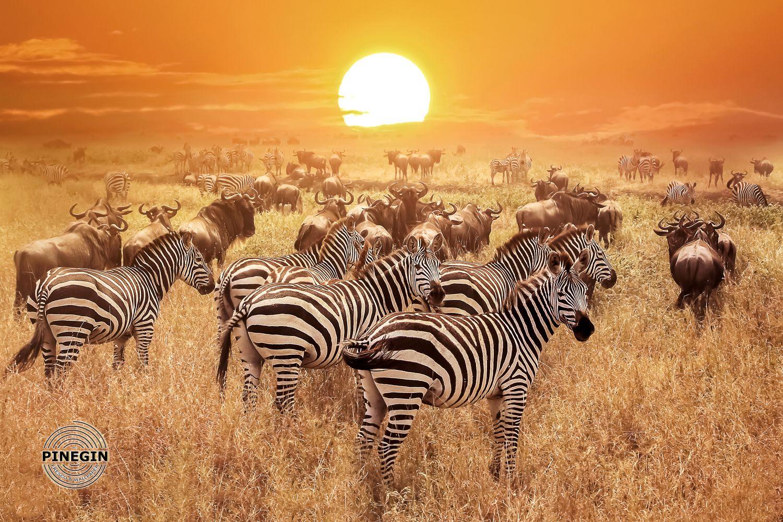 Фотообои «Зебры на закате»