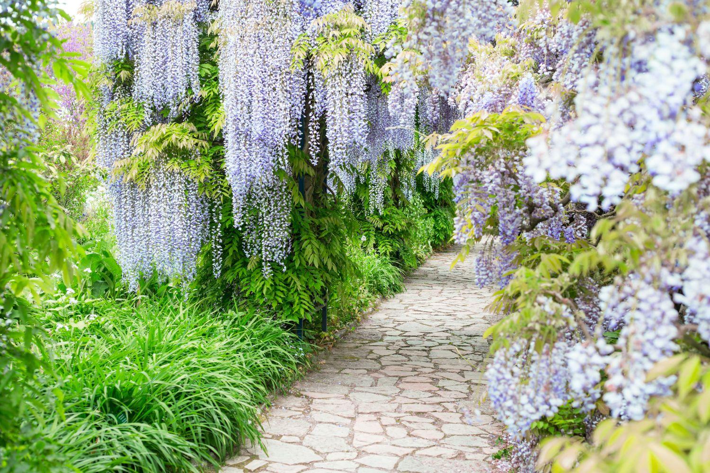 Фотообои «Цветочный сад»