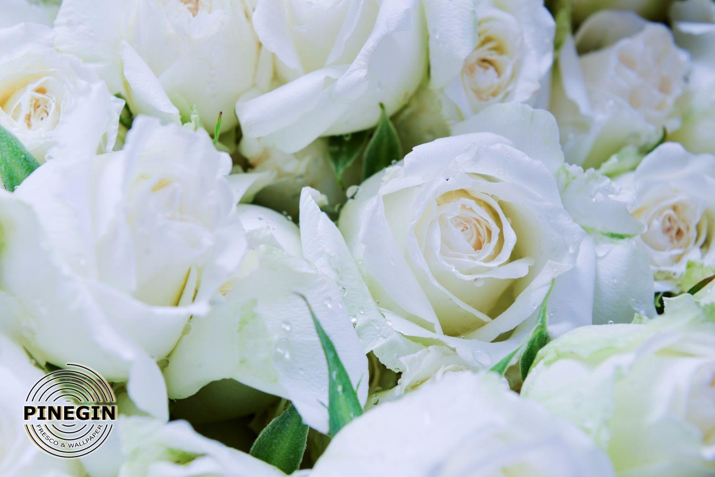 Фотообои «Розы»