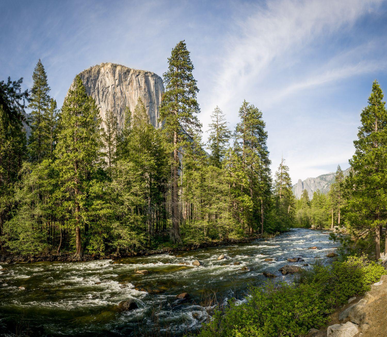 Фотообои «Река и сосны»