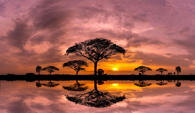 Фрески «Африка 22»