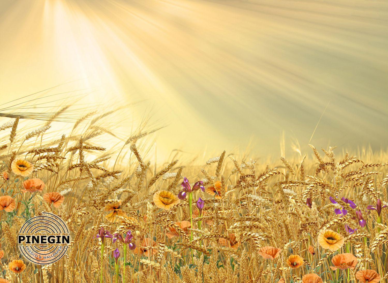 Фотообои «Поле с пшеницей»