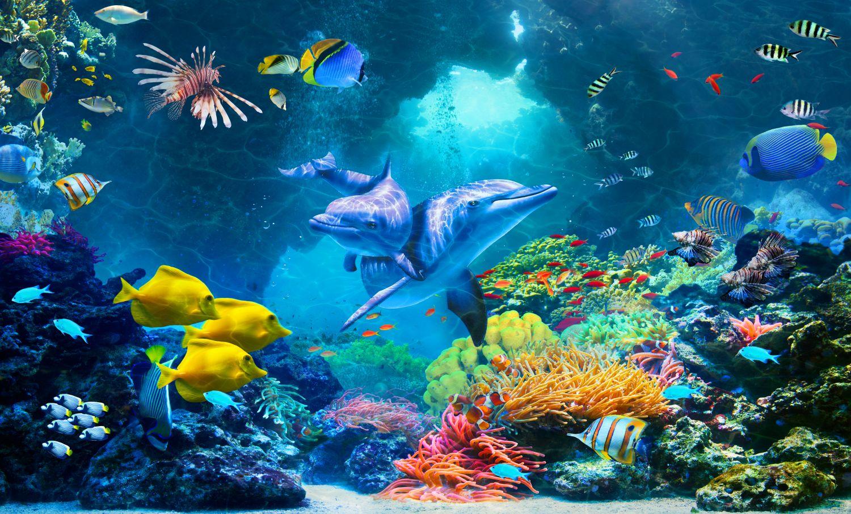 Фотообои «Дельфины и рыбы»