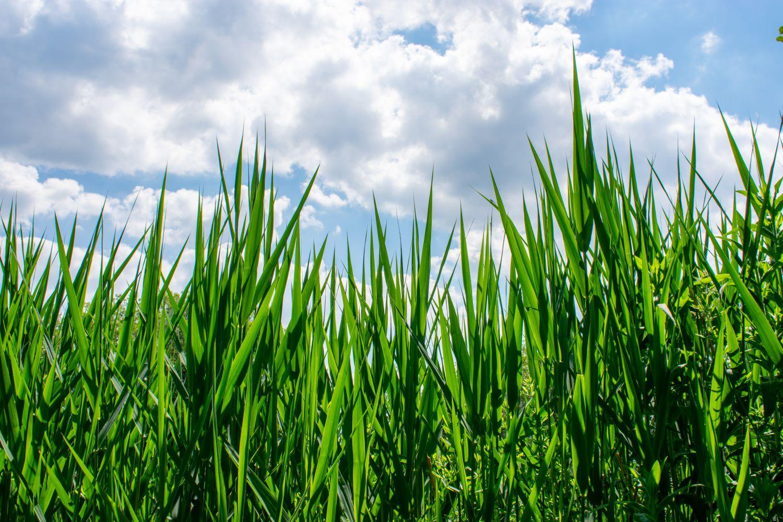 Фотообои «Трава 16»