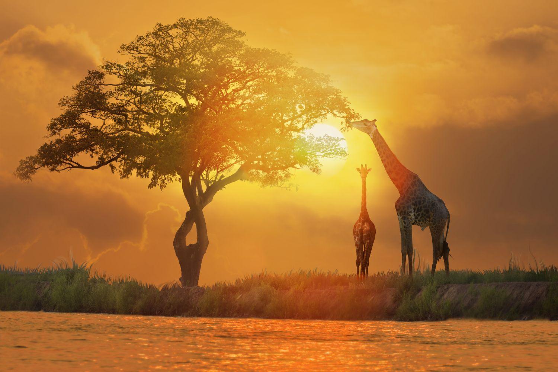 Фотообои «Африка 31»