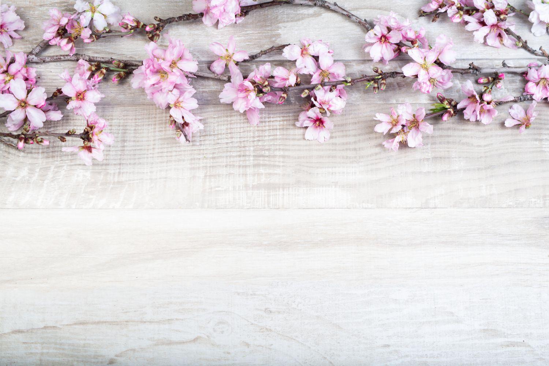 Фрески «Сакура 25»