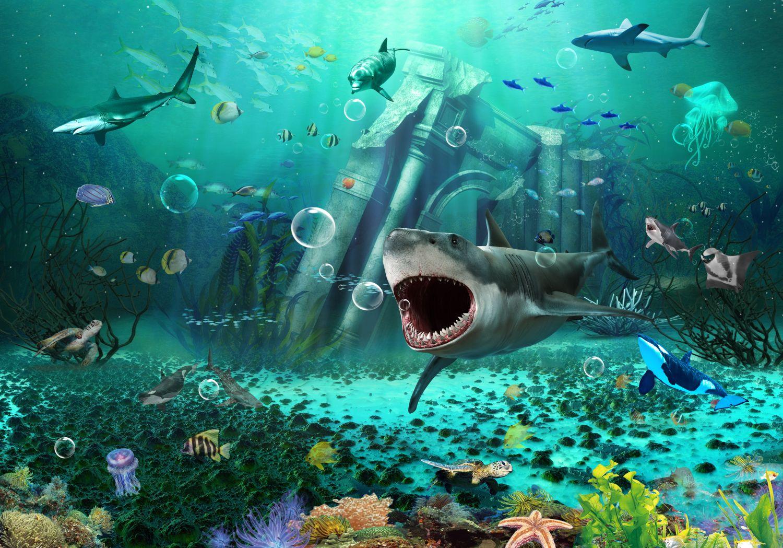 Фотообои «Акулы 23»