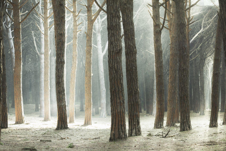 Фотообои «Стволы деревьев»