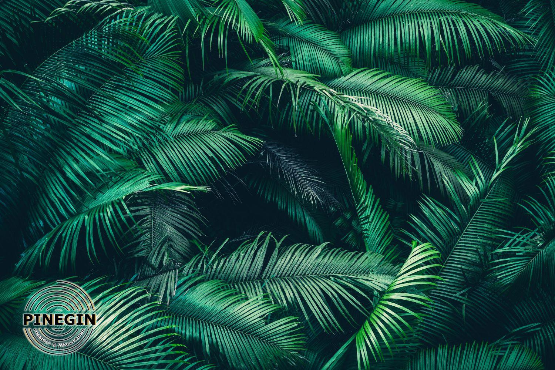 Фотообои «Ветви пальмы»