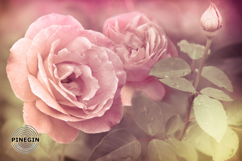 Фотообои «Розовый шепот»