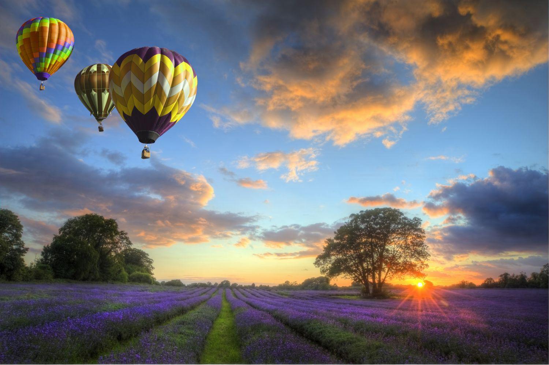 Фотообои «Воздушные шары над лавандовым полем»