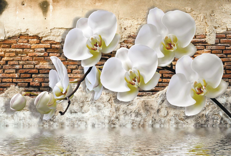 Фрески «Белые орхидеи»