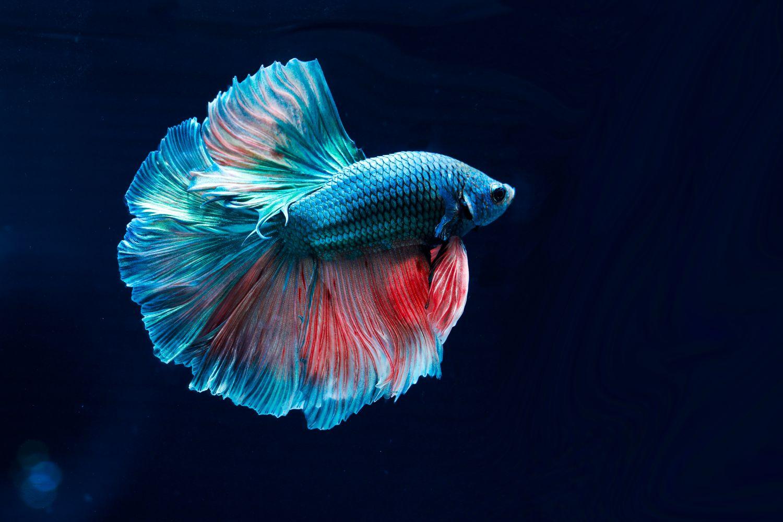 Фрески «Объемная рыбка»