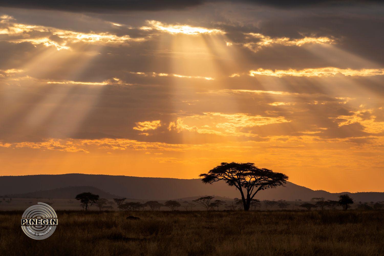 Фотообои «Закат в саванне»