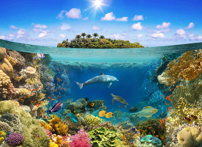 Фрески «Дельфин и подводные растения»