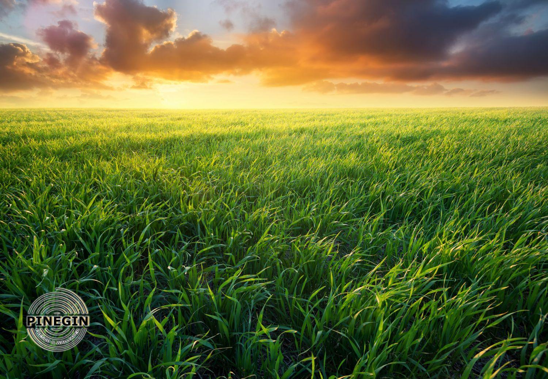 Фотообои «Трава»