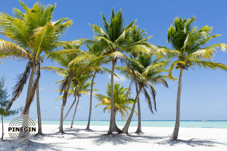 Фотообои «Пальмы»