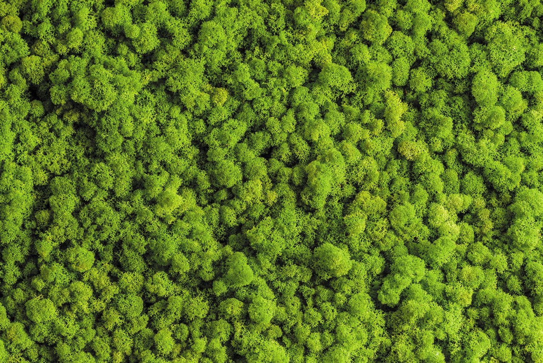 Фотообои «Стабилизированный мох»