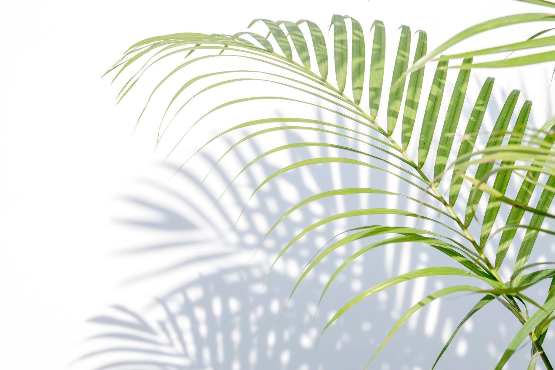 Фрески «Пальмы 3»