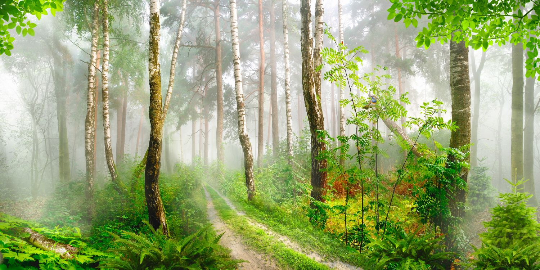 Фотообои «Таинственный лес»