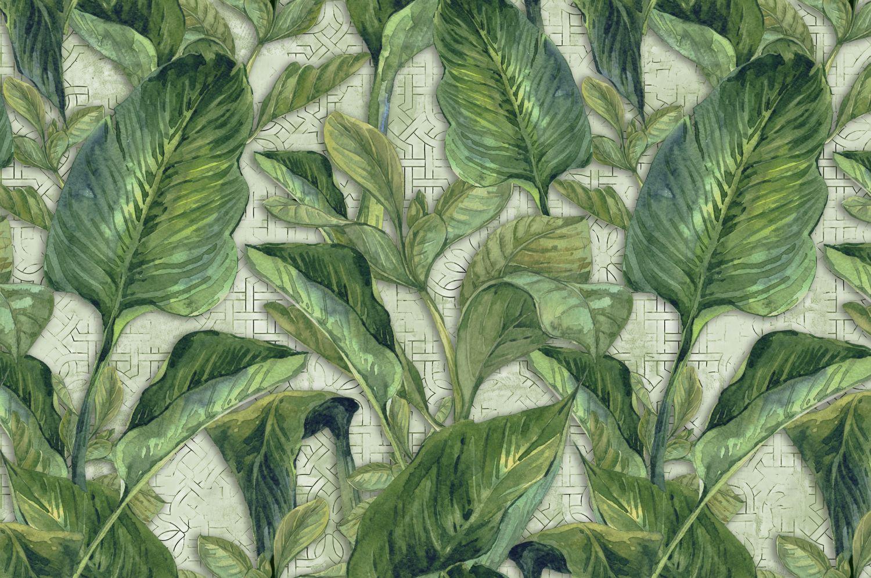 Фотообои «Вечнозеленые листья»