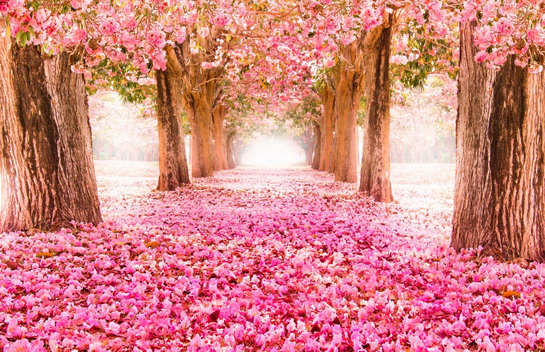 Фотообои «Сад цветущий розовым»